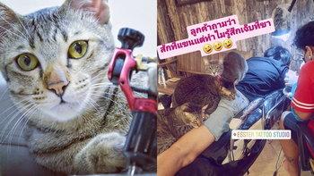 บริการร้านสักแนวใหม่ สุดน่ารัก สักกับเราคุณจะได้เล่นกับแมวแบบไม่อั้น!!!