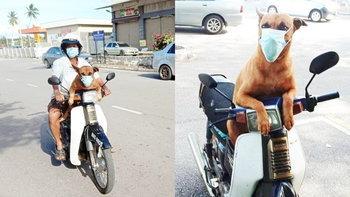 เซเลปหมู่บ้าน เจ้าอ้วนอ๋อง หมาแสนรู้ใส่หน้ากากอนามัยทุกครั้งเวลาได้ไปเที่ยว