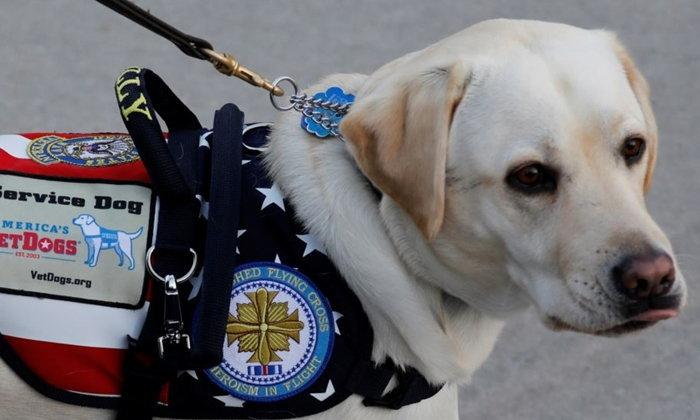 """""""สุนัขบริการ"""" ช่วยบำบัดผู้พิการทางกายและป่วยทางจิต"""