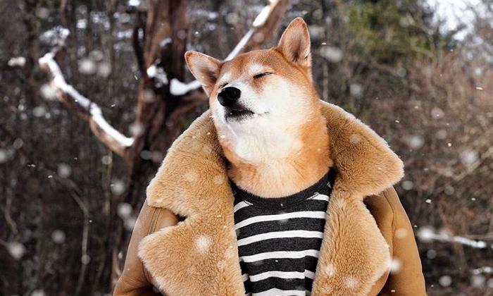สุนัขผู้นำแฟชั่น เจ้าตูบ