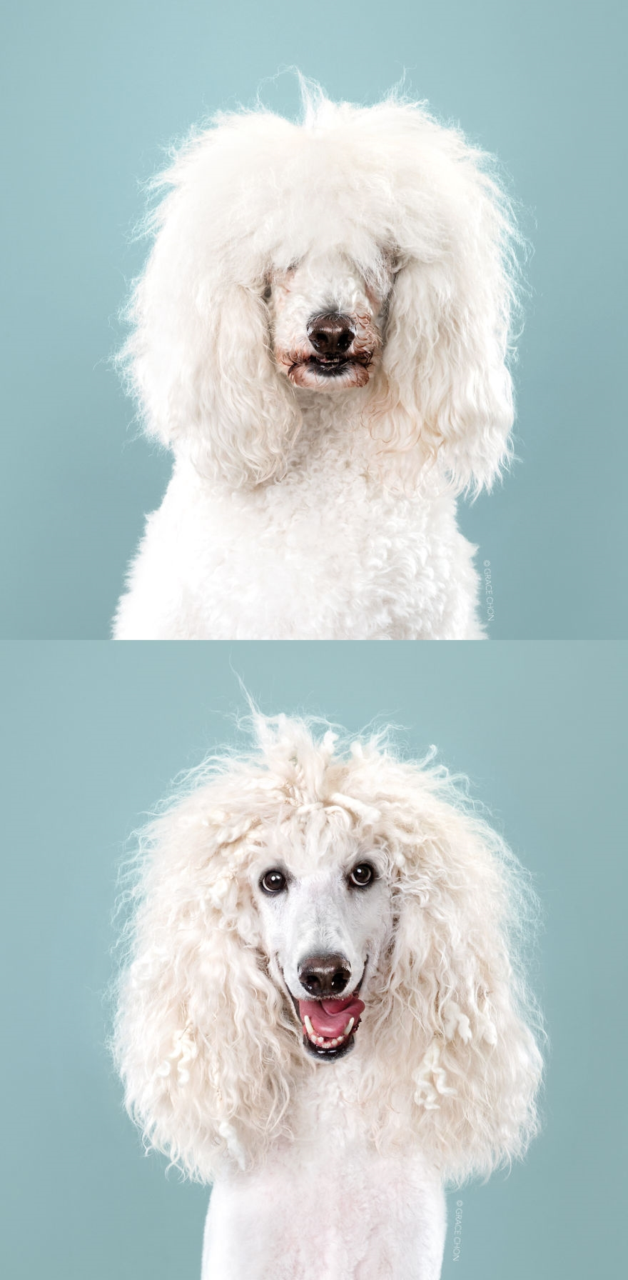 dogs-before-and-after-their-h