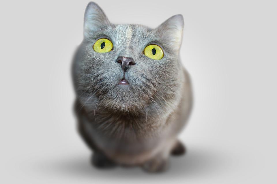 03greycat