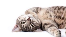 แมว จะนอนอยู่บ้านให้คนเกาคางทั้งวัน