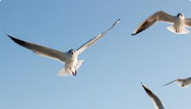 นก อยากบินฟรีสไตล์ ไปนั่นไปนี่