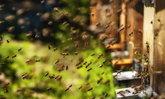 """วิธีกำจัด """"ผึ้ง ต่อ"""" พร้อมรัง ออกจากบ้านแบบไม่ต้องเจ็บตัว"""