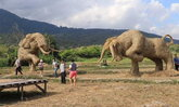 ตื่นตาตื่นใจ 9 หุ่นฟางสัตว์ป่าใต้พระบารมีพ่อ ภายในอ่างเก็บน้ำห้วยตึงเฒ่า