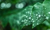 เตือน 9 โรค 4 ภัยสุขภาพอันตรายช่วงฤดูฝน