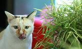 รู้จักต้นไม้แมวกินได้ เป็นทั้งสมุนไพร และดีต่อสุขภาพของเจ้าเหมียว
