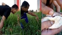 """หนุ่มโชว์สุดระทึก """"จูบงูจงอางตัวใหญ่"""" ที่อยู่ในพงหญ้า แถมง้างปากโชว์ให้ดูกันชัดๆ"""