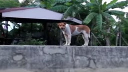 สุนัขหลงทาง ยืนรอเจ้าของบนแบริเออร์ นานนับปี