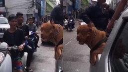 วัยรุ่นยังกล้าๆ กลัวๆ ควันหลงสงกรานต์เจ้าของสุนัขพันธุ์ พิทบูล