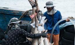 ช็อกแป๊บ! ผลสำรวจพบคนไทย 61% อยากลองหูฉลาม ครึ่งหนึ่งไม่รู้ว่าต้องฆ่า เพื่อเอาครีบ