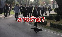 """แมวดำวิ่งตัดหน้า """"บิ๊กตู่"""" ในทำเนียบรัฐบาล วิจารณ์หึ่ง! สงสัยลางไม่ดี ตั้งรัฐบาลไม่ราบรื่น"""