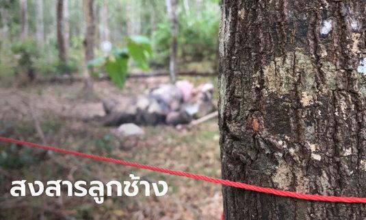 สุดเศร้า ลูกช้างป่ากุยบุรี นอนตายเดียวดาย คาดติดเฮอร์ปีส์ไวรัสจนถูกโขลงทิ้ง
