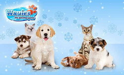รักน้องหมา หาน้องแมว ต้องเล่นเกม Wauies: The Pet Shop
