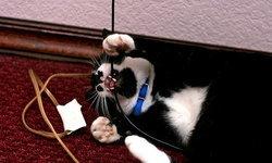 5 วิธีป้องกันแมวตัวร้าย จ้องทำลายสายไฟเครื่องเกม