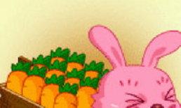 rabbit farm