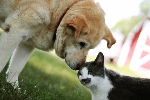 วิธีแสดงความรักของแมว