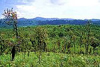 ผืนป่าทุ่งใหญ่นเรศวร ได้รับการประกาศให้เป็น เขตรักษาพันธุ์สัตว์ป่า