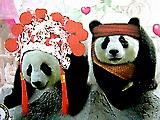 งานแต่งงานของช่วงช่วงและหลินฮุ่ย