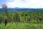 ผืนป่าทุ่งใหญ่นเรศวร