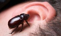 """ยืนยันชัดๆ! """"แมลงเข้าหู"""" ปฐมพยาบาลเบื้องต้นอย่างไร?"""