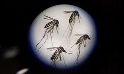 """""""ไวรัสซิกา"""" ไทยเฝ้าระวังขั้นสูงสุด หลังพบผู้ป่วย 70 ประเทศทั่วโลก"""
