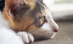 หมาแมวที่ไม่ได้เป็นโรคพิษสุนัขบ้า ก็ยังเสี่ยงทำให้เราเสียชีวิตได้