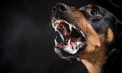"""อาการของคนที่ติดเชื้อโรค """"พิษสุนัขบ้า"""""""