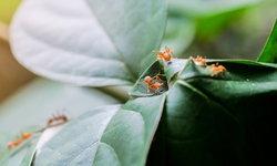 วิธีป้องกันอันตรายจากสัตว์มีพิษในช่วงหน้าฝน