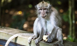 """""""ฝีดาษลิง"""" คืออะไร? ติดต่อจากลิงสู่คนได้อย่างไร? อันตรายแค่ไหน?"""