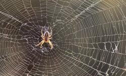 แมงมุมมีพิษกัด ควรทำอย่างไร?
