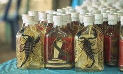 """""""ยาดอง"""" สัตว์มีพิษ อันตรายถึงตายได้"""