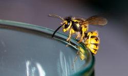 """อันตรายจาก """"ผึ้งต่อย"""" คุณแพ้พิษผึ้งมากแค่ไหน ?"""