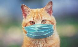 """วิจัยเผย """"แมว"""" ติด """"โควิด-19"""" แพร่เชื้อให้ตัวอื่นได้ แม้ไม่แสดงอาการ"""