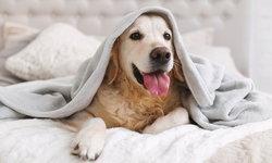 """นักวิจัยค้าน การคำนวณ """"อายุสุนัข"""" ไม่ใช่การคูณจำนวนปีด้วยเลข 7"""