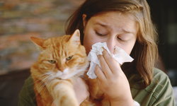 """โรค """"ภูมิแพ้สัตว์เลี้ยง"""" และอาการเบื้องต้น ที่คนรักสัตว์ควรรู้"""
