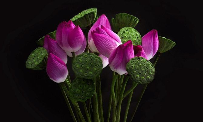 lotus-pod