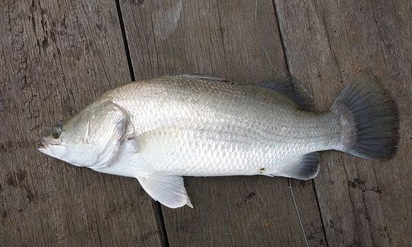 10 ปลาไทยราคาบ้านๆ โอเมก้า 3 สูงไม่แพ้แซลมอน