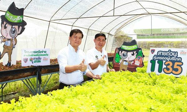 """""""สายสืบผักสด"""" สอนเพาะปลูกผักผลไม้ปลอดภัยด้วยระบบเกษตรอินทรีย์"""