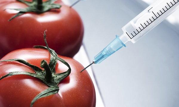 สรุปเลย! GMOs พืชและสัตว์ดัดแปลงพันธุกรรม ดีหรือไม่ดีกันแน่?