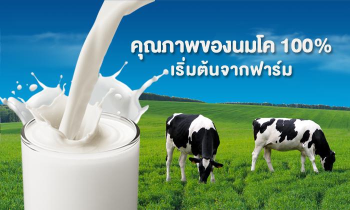 คุณภาพของนมโค 100% เริ่มต้นจากฟาร์ม
