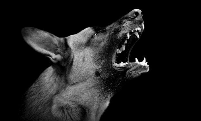 """หมาแมวข่วน กัด เสี่ยง """"พิษสุนัขบ้า"""" อาการกำเริบให้หลังได้เป็นปี"""