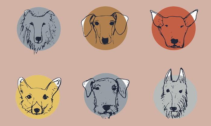 """วิธีสังเกตสัตว์เลี้ยงแสนรักจาก """"พิษสุนัขบ้า"""""""