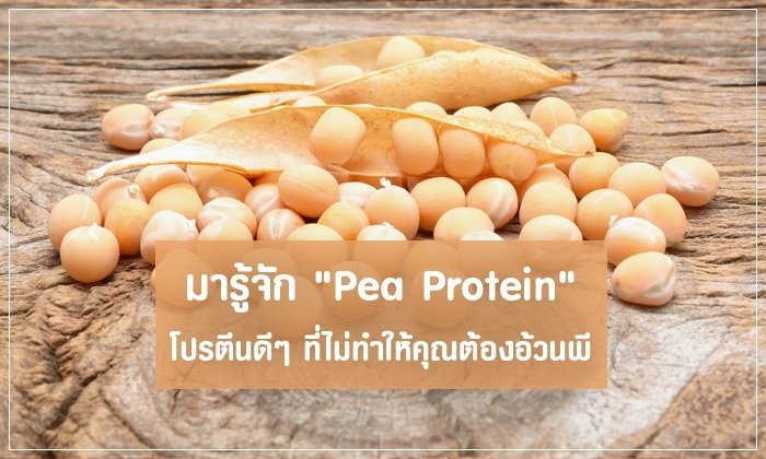 """มารู้จัก """"Pea Protein"""" โปรตีนดีๆ ที่ไม่ทำให้คุณต้องอ้วนพี"""