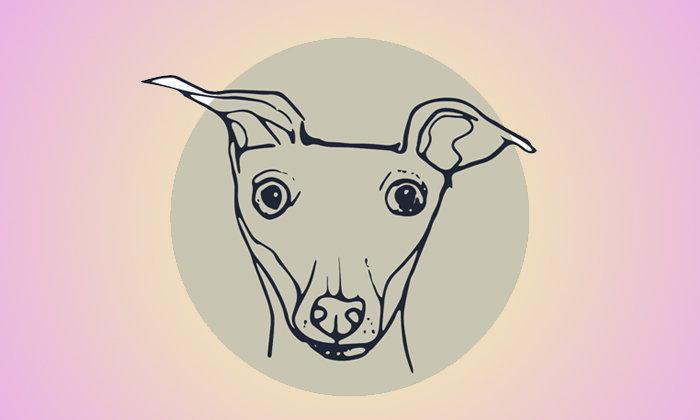 พบผู้ติดเชื้อพิษสุนัขบ้ามากกว่าปี 2017 ถึง 1.5 เท่า