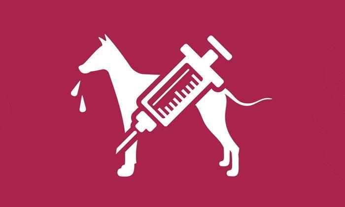 แนะ 4 กลุ่มเสี่ยง ฉีดวัคซีนป้องกันโรคพิษสุนัขบ้า สร้างภูมิคุ้มกัน