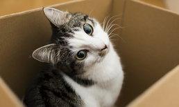 """แปลกแต่จริง! พบฝีในสมอง จากการเลี้ยง """"แมว"""""""
