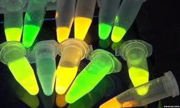 """""""พลาสติกชนิดใหม่"""" ผลิตสารฆ่าเชื้อโรคได้เมื่อเจอแสงแดด"""