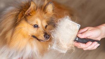 ขนหมา-แมว เข้าปอดจนทำให้เสียชีวิตได้ จริงหรือไม่?